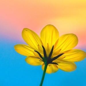今日のマヤ暦「本気になれるものを見つけましょう」KIN84 黄色い種・青い嵐・音6