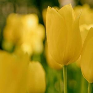 今日のマヤ暦「大らかな心で接しましょう」KIN88 黄色い星・青い嵐・音10