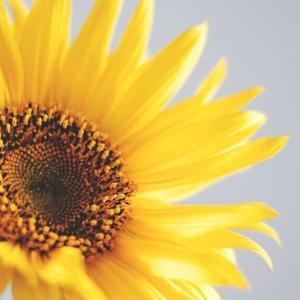今日のマヤ暦「一つの道を究(きわ)めましょう」KIN92 黄色い人・黄色い人・音1