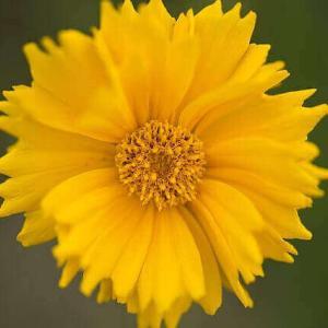 今日のマヤ暦「好きなことを続けましょう」KIN100 黄色い太陽・黄色い人・音9 & 来週のポイント