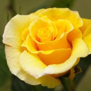 今日のマヤ暦「余計なものを削ぎ落としましょう」KIN108 黄色い星・赤い蛇・音4