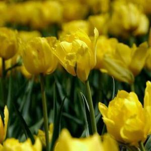 今日のマヤ暦「麗しい日(思ったことが叶いやすい日)」KIN112 黄色い人・赤い蛇・音8