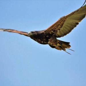 今日のマヤ暦「今と未来に目を向けましょう」KIN115 青い鷲・赤い蛇・音11
