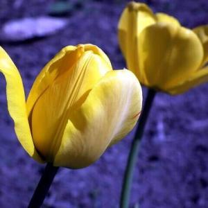 今日のマヤ暦「人の魅力を引き出しましょう」KIN120 黄色い太陽・白い鏡・音3
