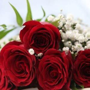 今日のマヤ暦「何気なくしたことが大きな実りをもたらす日」KIN121 赤い龍・白い鏡・音4 & 来週のポイント