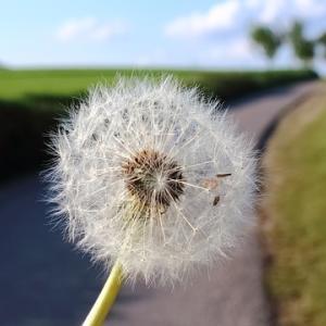 今日のマヤ暦「前向きな心でいきましょう」KIN122 白い風・白い鏡・音5