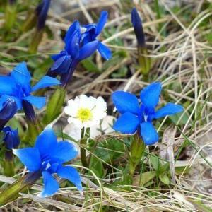 今日のマヤ暦「小さな達成感を大切にしましょう」KIN123 青い夜・白い鏡・音6