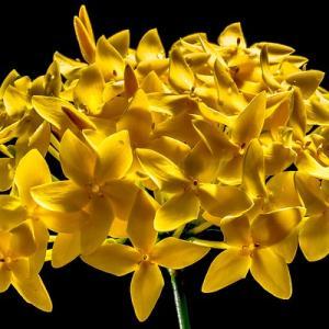 今日のマヤ暦「面倒なことにも向き合いましょう」KIN128 黄色い星・白い鏡・音11