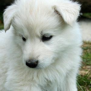 今日のマヤ暦「考え込まず、進みましょう」KIN130 白い犬・白い鏡・音13