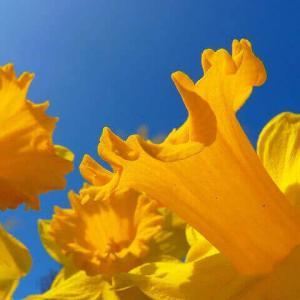 今日のマヤ暦「守りに入らず挑戦しましょう」KIN132 黄色い人・青い猿・音2