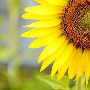 今日のマヤ暦「小さなことでも真剣に取り組みましょう」KIN140 黄色い太陽・青い猿・音10