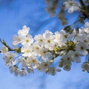 今日のマヤ暦「先を気にせず待ちましょう」KIN142 白い風・青い猿・音12 & 来週のポイント