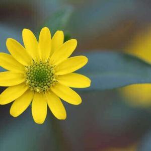 今日のマヤ暦「柔らかさを持ちましょう」KIN144 黄色い種・黄色い種・音1