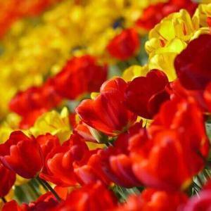 今日のマヤ暦「リラックスの時間を持ちましょう」KIN145 赤い蛇・黄色い種・音2