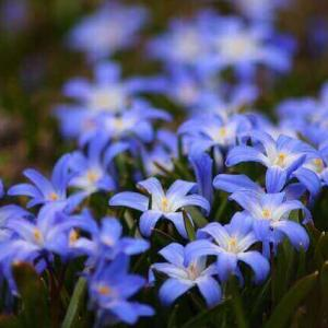 今日のマヤ暦「与える側にまわりましょう」KIN147 青い手・黄色い種・音4