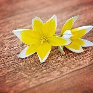 今日のマヤ暦「外より内に目を向けましょう」KIN148 黄色い星・黄色い種・音5