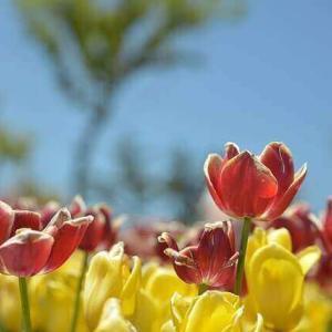 今日のマヤ暦「応援してくれる人とつき合いましょう」KIN149 赤い月・黄色い種・音6 & 来週のポイント