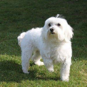 今日のマヤ暦「自分に正直になりましょう」KIN150 白い犬・黄色い種・音7