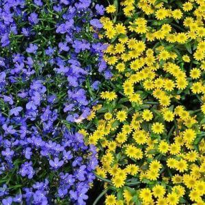 今日のマヤ暦「直感を大切にしましょう」KIN151 青い猿・黄色い種・音8