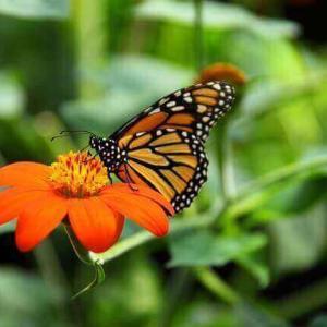 今日のマヤ暦「自信があるふりをしましょう」KIN153 赤い空歩く人・黄色い種・音10