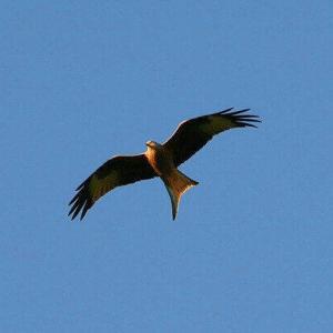 今日のマヤ暦「心のままに生きましょう」KIN155 青い鷲・黄色い種・音12