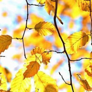 今日のマヤ暦「心を開いて語り合いましょう」KIN164 黄色い種・赤い地球・音8
