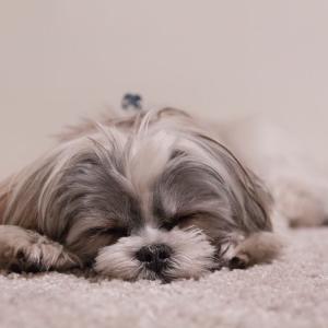 今日のマヤ暦「家族と思える人を増やしましょう」KIN170 白い犬・白い犬・音1