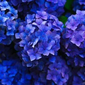 今日のマヤ暦「自分の夢に挑戦しましょう」KIN183 青い夜・青い夜・音1