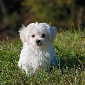 今日のマヤ暦「愛する存在を持ちましょう」KIN210 白い犬・赤い月・音2