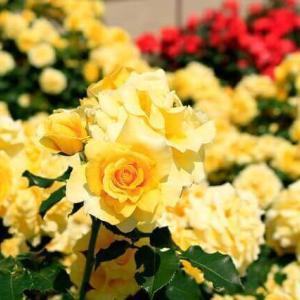 今日のマヤ暦「自分の長所を磨きましょう」KIN212 黄色い人・赤い月・音4 & 来週のポイント