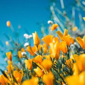 今日のマヤ暦「しなやかさを持ちましょう」KIN216 黄色い戦士・赤い月・音8