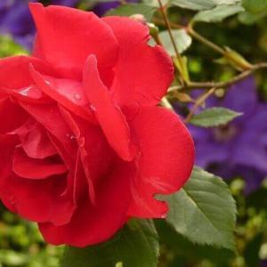 今日のマヤ暦「イライラする前に気分転換しましょう」KIN165 赤い蛇・赤い地球・音9