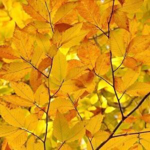 今日のマヤ暦「逆境を学びに変えましょう」KIN180 黄色い太陽・白い犬・音11