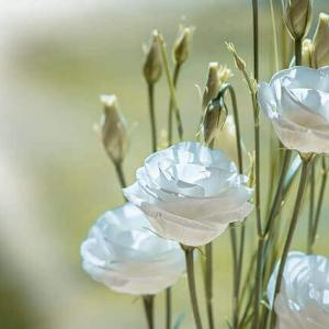 今日のマヤ暦「忍耐から学びましょう」KIN182 白い風・白い犬・音13