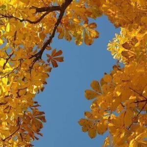 今日のマヤ暦「大胆に殻を破りましょう」KIN184 黄色い種・青い夜・音2 & 来週のポイント