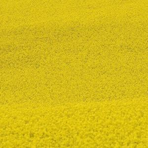 今日のマヤ暦「大胆に行動しましょう」KIN196 黄色い戦士・黄色い戦士・音1