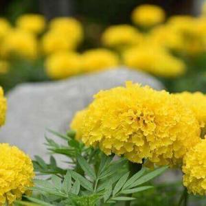 今日のマヤ暦「思い通りにならないことから学びましょう」KIN200 黄色い太陽・黄色い戦士・音5