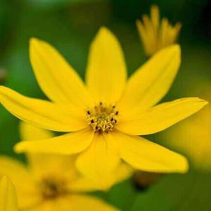 今日のマヤ暦「新しいことに挑戦しましょう」KIN204 黄色い種・黄色い戦士・音9