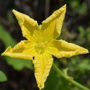 今日のマヤ暦「やり残していることを仕上げましょう」KIN208 黄色い星・黄色い戦士・音13