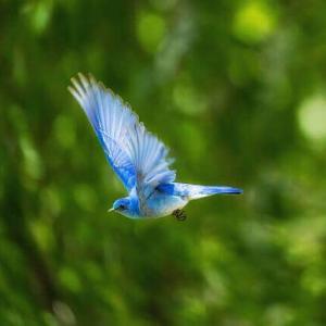 今日のマヤ暦「新しい一歩を踏み出しましょう」KIN215 青い鷲・赤い月・音7