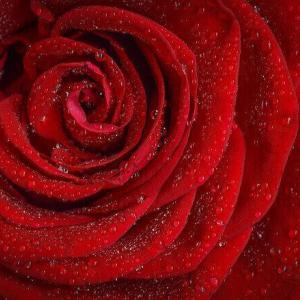 今日のマヤ暦「自分自身を見つめ直しましょう」KIN221 赤い龍・赤い月・音13