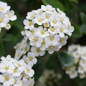 今日のマヤ暦「執着心を手放しましょう」KIN222 白い風・白い風・音1
