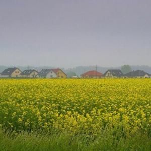 今日のマヤ暦「芸術に触れましょう」KIN224 黄色い種・白い風・音3