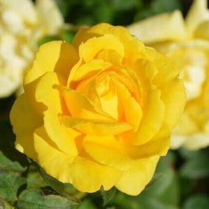 今日のマヤ暦「ボランティア精神を持ちましょう」KIN228 黄色い星・白い風・音7