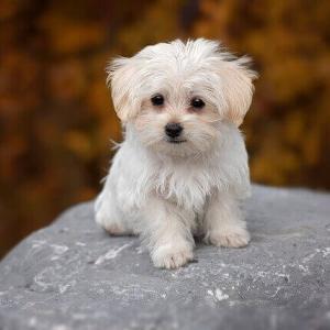 今日のマヤ暦「タイミングを見極めましょう」KIN230 白い犬・白い風・音9