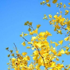 今日のマヤ暦「無条件の愛を持ちましょう」KIN240 黄色い太陽・青い鷲・音6