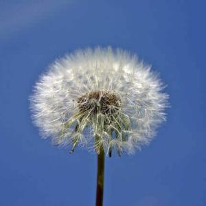 今日のマヤ暦「共感を大切にしましょう」KIN242 白い風・青い鷲・音8