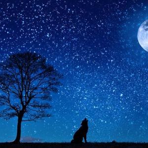 今日のマヤ暦「静かな時間を持ちましょう」KIN243 青い夜・青い鷲・音9