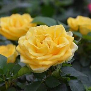 今日のマヤ暦「学びが形になるでしょう」KIN244 黄色い種・青い鷲・音10