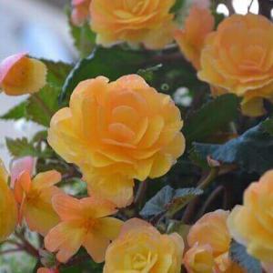 今日のマヤ暦「美しさを意識しましょう」KIN248 黄色い星・黄色い星・音1